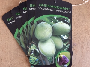 Asimina triloba Shenandoah ® Peterson Pawpaws