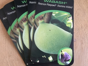 Asimina triloba Wabash® Peterson Pawpaws