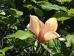 Magnolia Flamingo