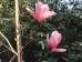 Magnolia Rose Marie